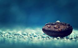 Coffee Bean Water Drops Macro Photo