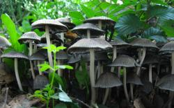 Cogumelos mushrooms