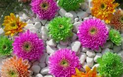 Colored Flowers Stones