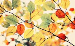 Colorful Autumn Leaves Nature