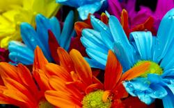 ... Lovely Colorful Flowers Wallpaper ...