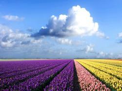 Colorful Flower Field Hd Wallpaper