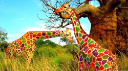 Colorful giraffes art