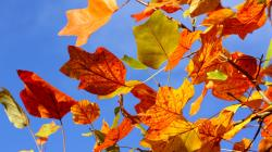 Colorful Leaves Background