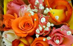 Colorful Rose Bouquet Wallpaper #67087 - Resolution 1920x1200 px