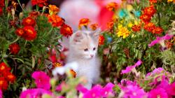 Kitten With Colorful Spring Flowers Wallpaper Hd
