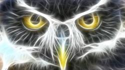 Image for Cool Animal Backgrounds   Desktop Image