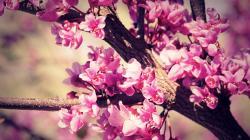 Flower Wallpaper Tumblr wallpaper
