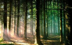 Cool Forest Sun