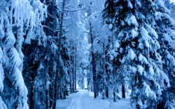 """Download the following Frozen Forest 34215 by clicking the orange button positioned underneath the """"Download Wallpaper"""" section."""