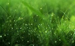 Grass Wallpaper 04