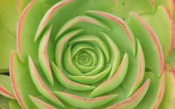 Green Flowers 17339