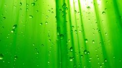 Download Cool Green Background Colour Wallpaper Hd 1920x1080px