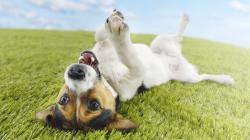 Happy Dog Wallpaper
