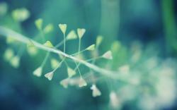 Amazing Plant Macro Wallpaper High Definition Wallpaper