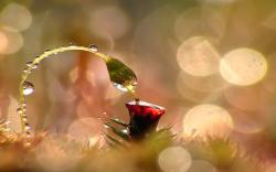 3d_abstract_macro_water_drops_photography Beautiful-Amazing-Macro-Photography-Wallpaper ...