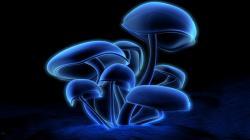 neon glowing mushrooms high resolution wallpaper