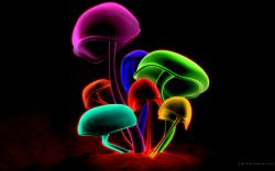Related wallpaper for Mushroom