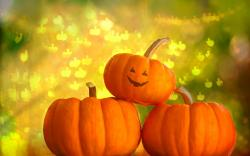 Cool Pumpkin Wallpaper · Cute Pumpkin Wallpaper ...