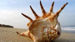 Cool Mohawk Sea Shell HD wallpapers
