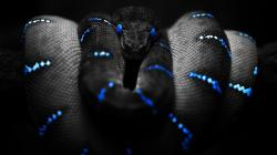 Images for Gt Cool Snakes Wallpapers 1920x1080px
