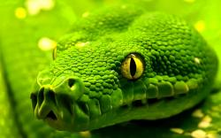 beautiful green snake hd wallpapers cool desktop background images widescreen