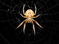 Cool Spider HD Wallpaper Desktop Download