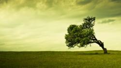 Cool Trees Wallpaper 12651