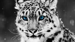 Following the click of the download button, right click on the image and select SAVE AS to complete your download. Filename : Cute Tiger Cool Wallpapers HD
