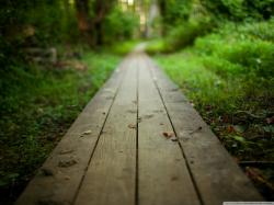 Cool Wooden Path Wallpaper 14813