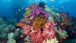 Collage Of Coral Reefs