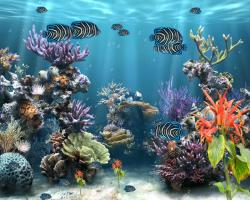 Zoom · mkv; Coral Reef ...