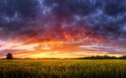 Cornfield red sunset