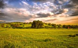 Clouds Landscapes Wallpaper 2560x1600 Clouds, Landscapes, Trees, HDR, Photography, Countryside