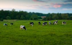 HD Wallpaper   Background ID:355233. 2560x1600 Animal Cow