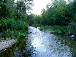 Mill Creek provides a suitable habitat for trout is now a managed fishery. Additional Picture