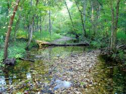 One of many spring fed creeks encountered on the Kaintuck Trail.