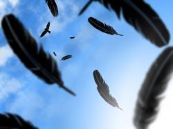 Animal - Crow Wallpaper