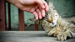 Cuddle cat