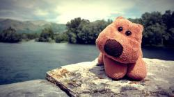 Cuddly toy Wallpapers Pictures Photos Images. «