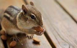 Cute Almonds Picture