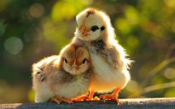 ... Cute Animal HD Wallpapers (1) ...