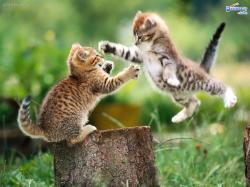 Cute Animal Desktop Wallpaper