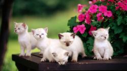 Cute Animal HD Wallpapers (7)