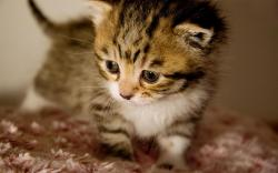 baby kittens pictures | ... backgrounds · Animal Life · Kitten | Cat | Big cat Cute baby kitten | Books Worth Reading | Pinterest