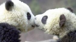 Widescreen resolutions (16:10): 1280x800 1440x900 1680x1050 1920x1200. Normal resolutions: 1024x768 1280x1024. Wallpaper Tags: kissing cute animals adorable