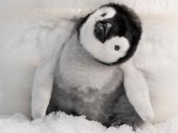 ... Cute Baby Penguin 02 ...