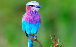Pix for Gt Cute Birds Wallpapers Desktop 1920x1200px