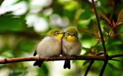 Cute Birds Couple Images