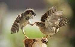 Cute birds animals widescreen Report favorite